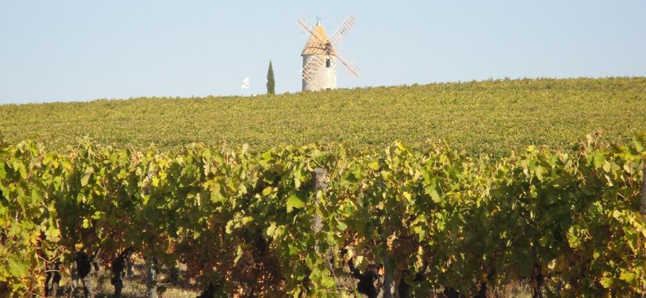 En Charente Maritime venez découvrir les vignes à la Haute Saintonge