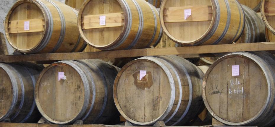 Le vignoble et ses caves en Charente Maritime à proximité du camping La Campière