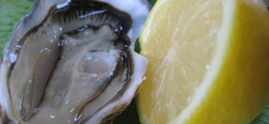 Les huîtres, un excellent produit de mer