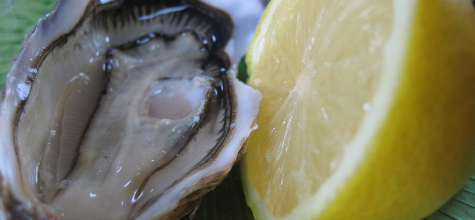 Dégustez nos produits de la mer, les huîtres
