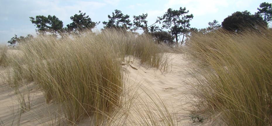Venez découvrir la plage de Boyardville à Saint Georges d'Oléron