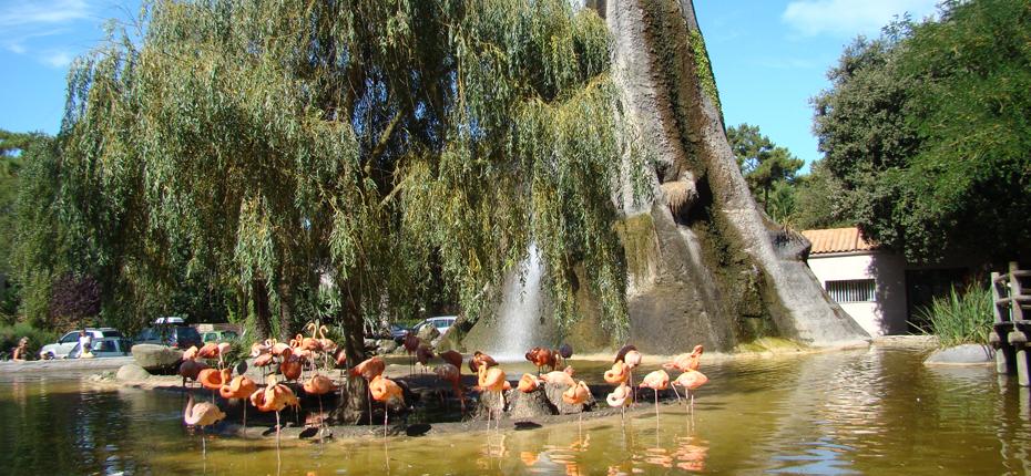 Les flamants roses du Zoo de la Palmyre