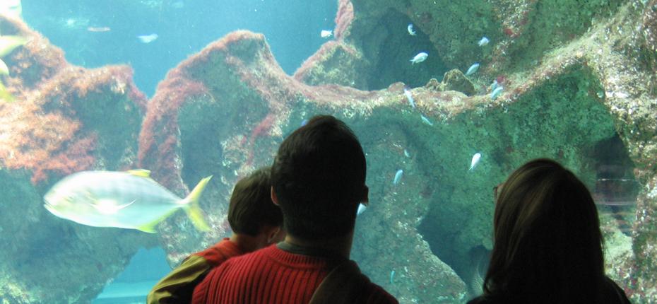 Visitez l'aquarium de la Rochelle