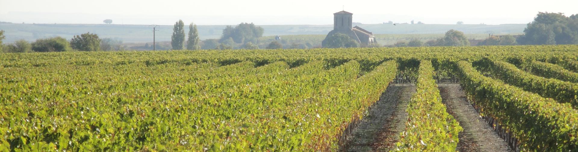 Découvrez le cognac et le pineau des Charentes