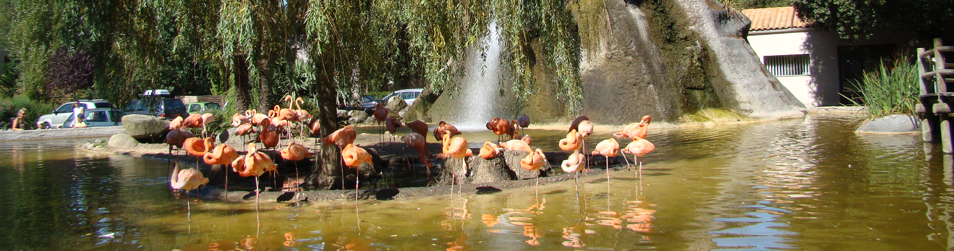 Visitez le fameux Zoo de la Palmyre